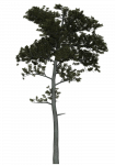 Pine Tree Tweak 1.png